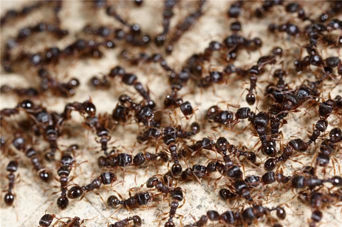 Karınca evi